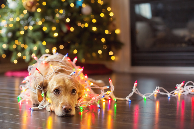 - 26 Beautiful Dog Photos That Will Literally Brighten Up Your Day