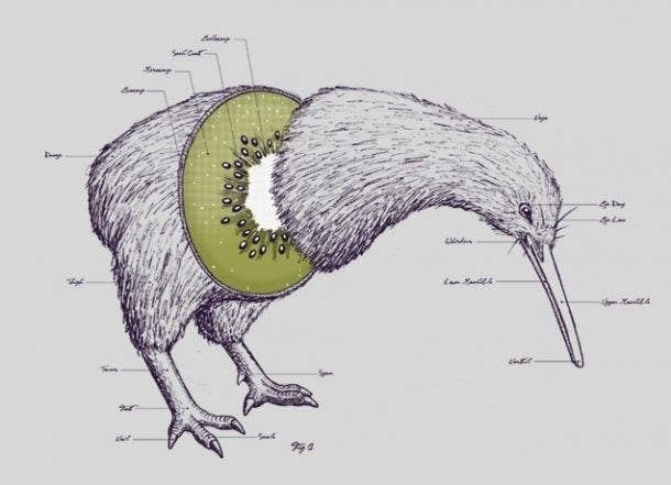 20 Facts About The Adorably Odd Kiwi Bird