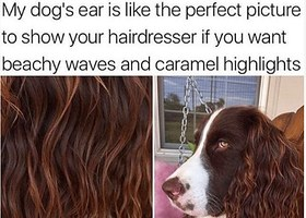 Buzzfeed What Does Your Dog Sound Like