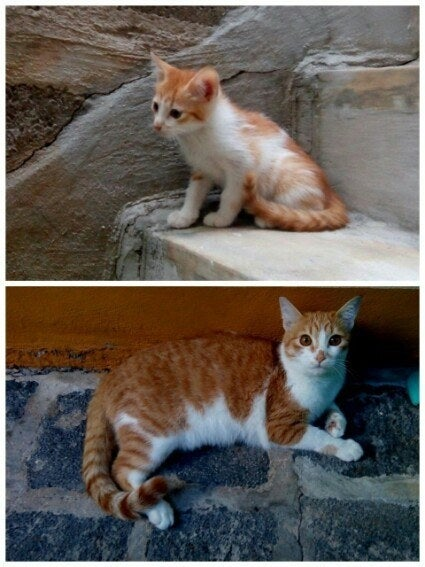"""Only a year difference but Simba has grown so fast!"" – hooriyyaha"