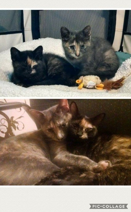 """Immy is the grey one, Yuffie (aka Poof) is the black one. Sisters and BFFs."" –m440666ea2"