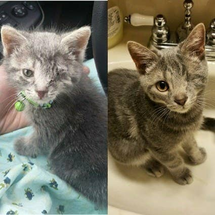 """The sick, tiny, nearly blind kitten on the left grew into the handsome, sassy cat on the right!"" – jessj4f166eda3"