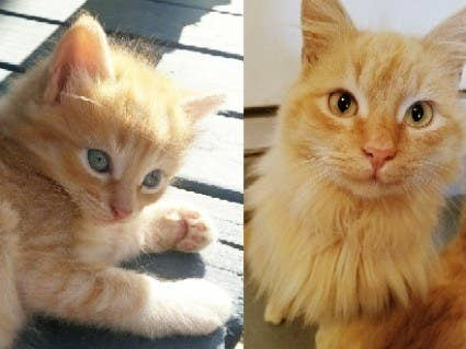 """My sweet Bo at five weeks and 10 months. He still has a bit of growing up to do!"" – mayivey"