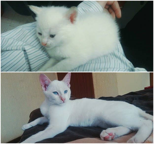 """This is Vanilla at six weeks and then at one year old."" – Maanskyn"
