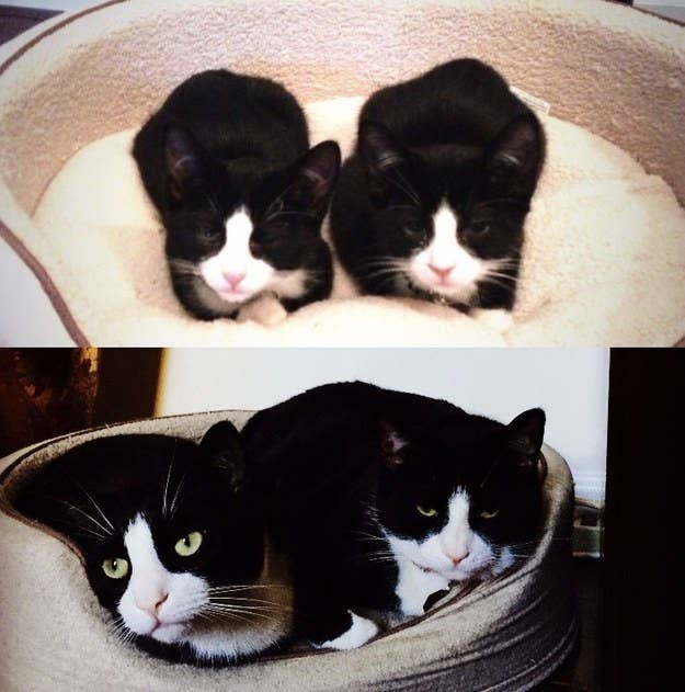 """My boys! Hudson and Watson. I had to buy a bigger bed."" – emilys467d618c1"