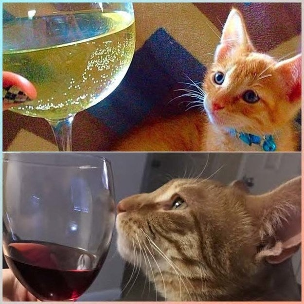 """Charlie, three months and three years - same affinity for wine."" – cachetlw"