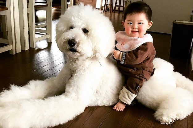 This Baby And Giant Dog S Friendship Proves All You Need In Life Is A Dog Twice Your Size