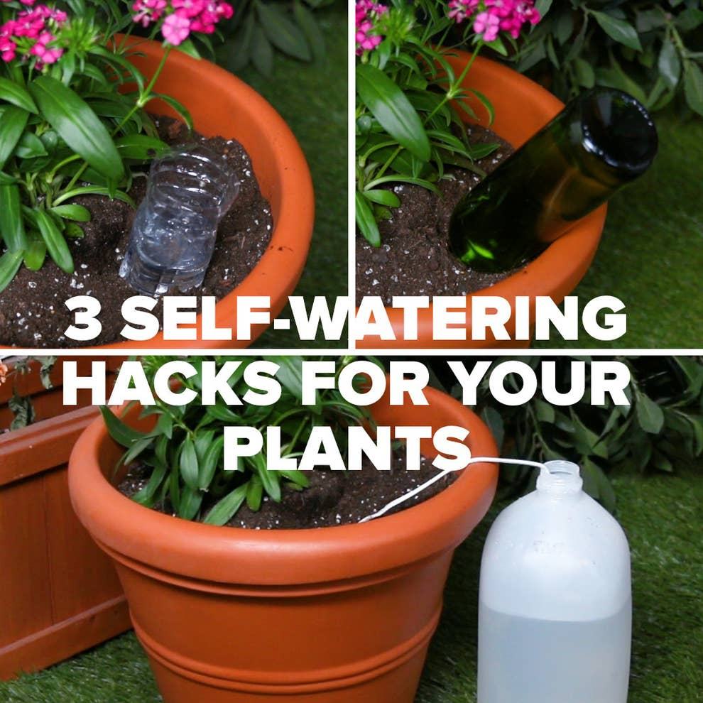 Keep Your Plants Happy And Hydrated With These 20 Self Watering Hacks