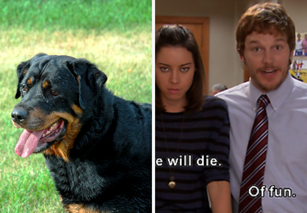 Name These Dogs And We'll Tell You If You're More Emotional Or Logical