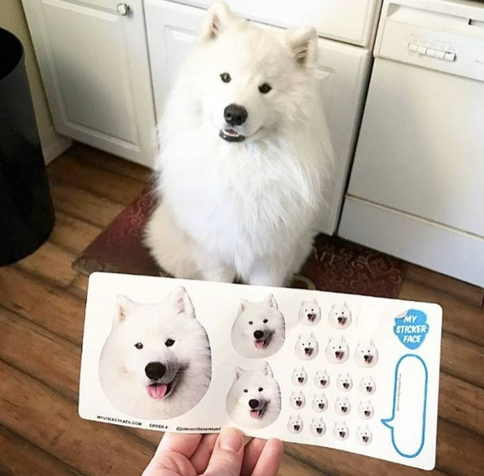 """Promising Review: """"Such a fun product! Excellent quality stickers in a variety of sizes. Can't wait to stick my pup's and my faces everywhere!"""" —JaclynGet 21 customized stickers in a variety of sizes from Amazon for $12."""