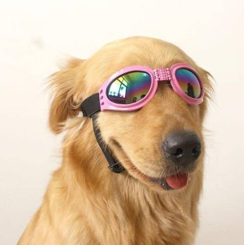 """Promising Review: """"These are the cutest glasses! I was so excited to get these and try them on my Jellybean! She thought she was just the queen of the world when we put these on her! These are awesome for when you ride in the car with the windows down! She can still see without the wind in her eyes!"""" —SarcasticaGet it on Amazon for $9.99 (available in two colors)."""