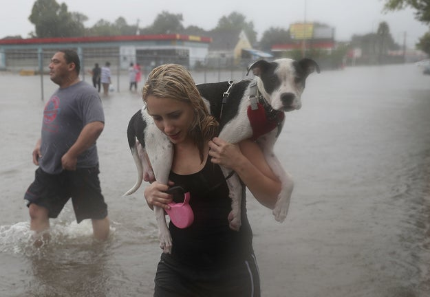 The victims of Tropical Storm Harvey's deadly floodwaters this week are not only human. Many animals, from dogs and cats to livestock, have had to flee their homes as well.