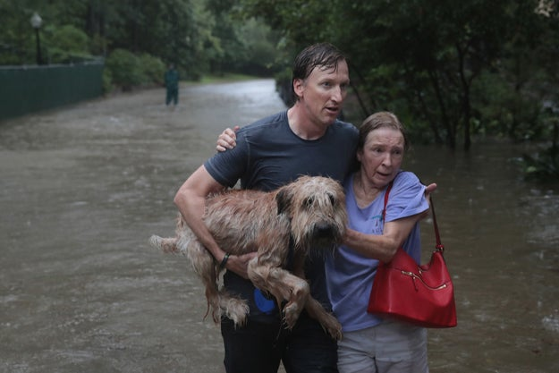 Many pet owners were able to grab their furry family members to evacuate in time.