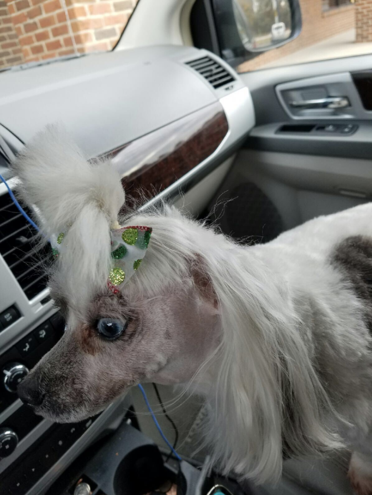 17 Adorable Dogs That Came Out Of The Groomer Not Looking Like Dogs