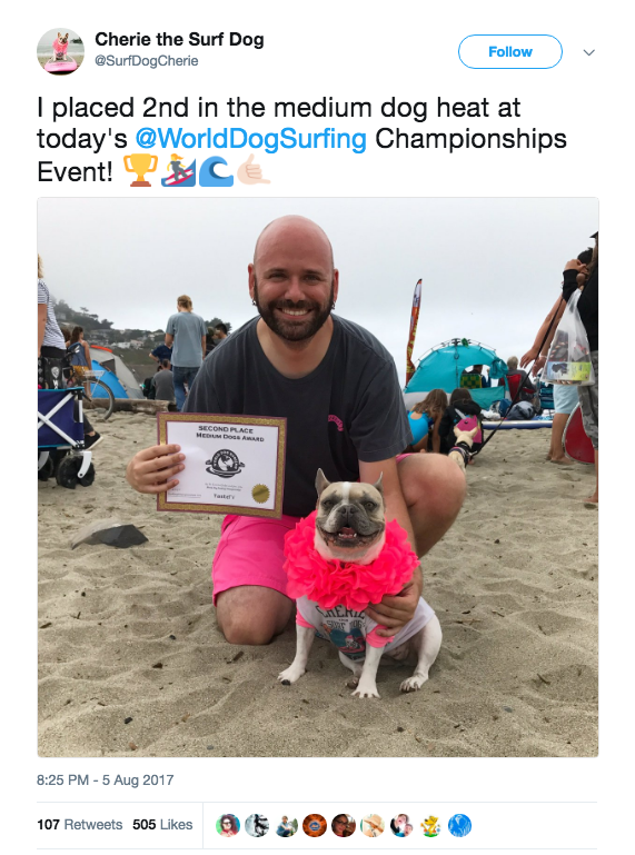 Dogs dressed in their competition finest for the cutthroat contest, in which — you guessed it — they got on surfboards and coasted toward the shore.