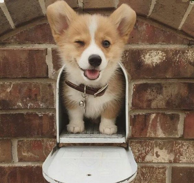 """Eventually you'll be able to say, """"Hey there. I'm a cute and friendly, corgi,"""" without saying anything at all. Straight-up-confidence."""