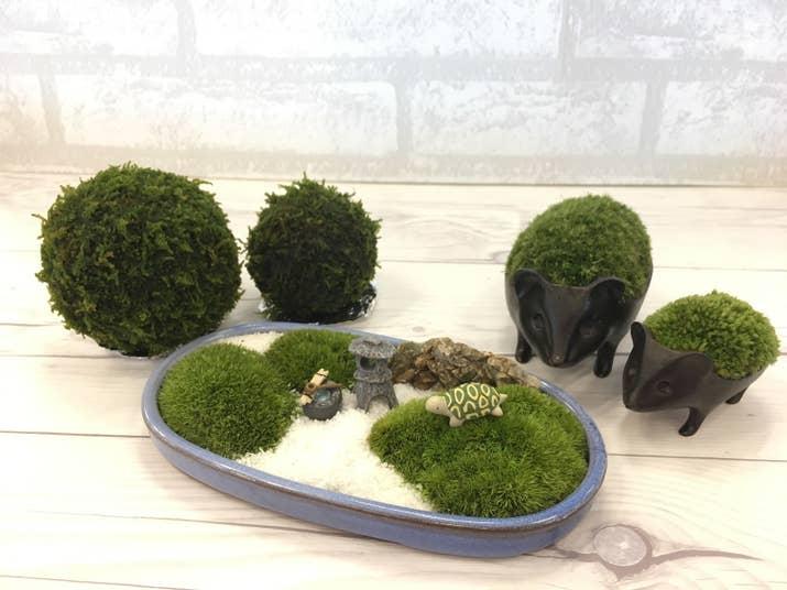 苔盆栽 インテリア 検索結果