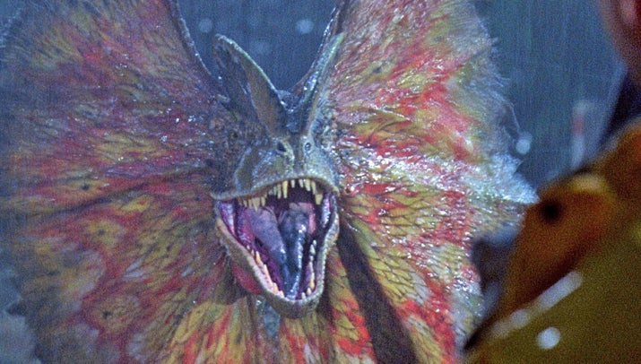The dilophosaurus was also significantly scaled down in the film so that the audience wouldn't confuse it with the velociraptors.