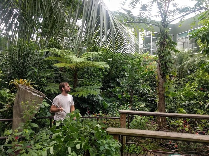 Jonathan Bremer captures butterflies that will be kept safe during Hurricane Irma.