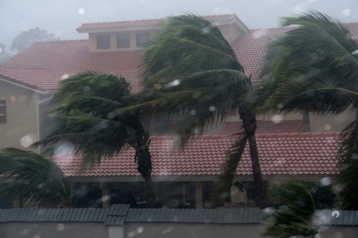 Palm trees blow in the winds of hurricane Irma in Bonita Springs, Florida.