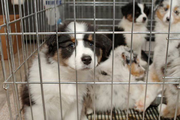 Puppies Might Be Causing A Diarrheal Illness Outbreak In