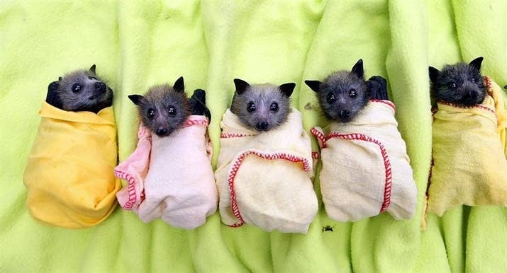 Photos Of Bats That Prove Theyre Adorable AF - 17 pictures that prove cats really dont give a damn
