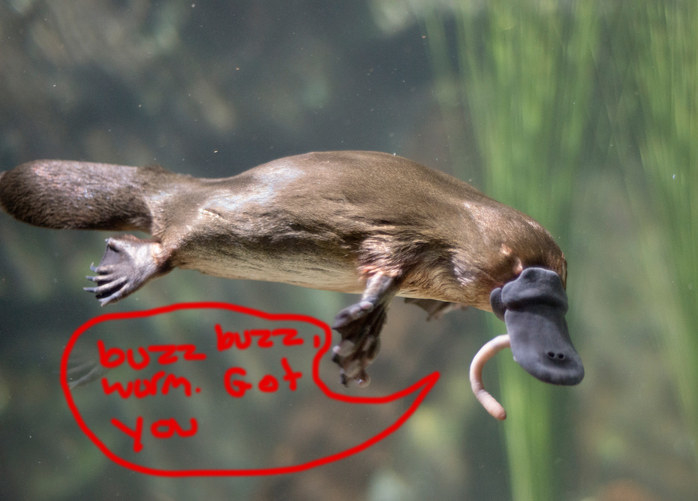 11 Reasons Platypuses Are Cool As Hell