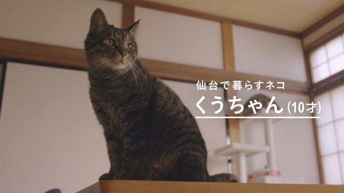 現在10歳のくうちゃん。人間の歳に例えると還暦に近い、高齢のネコです。