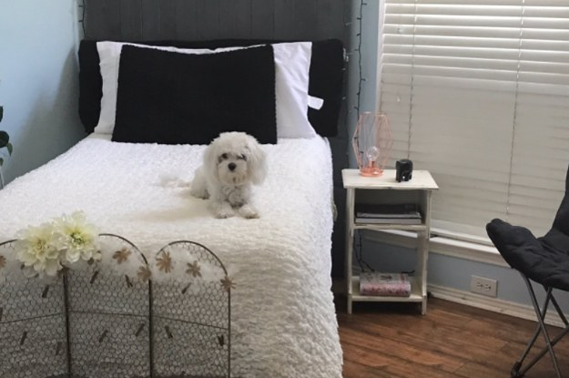 dog bedroom. This Teen Lost Her Room To Dog Immediately After She Moved Away For  College And People Are Dying