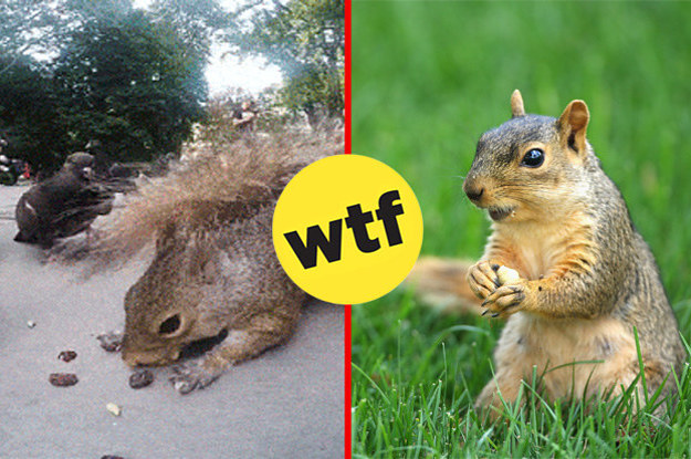 13 Times Squirrels Proved They're Totally Evil And Shouldn't