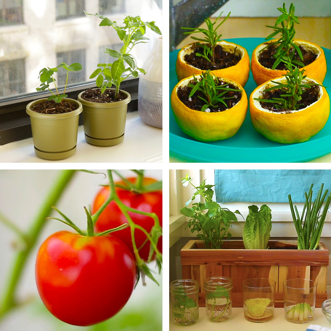 Make Your Own Kitchen Garden