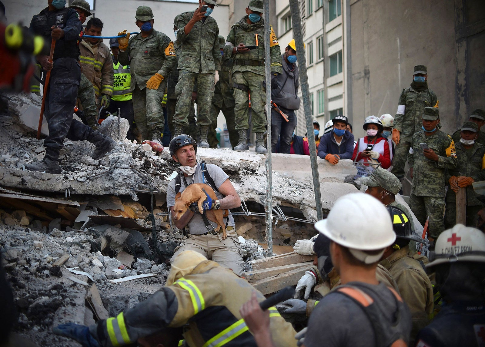 A rescuer pulls a dog out of the rubble during the search for survivors in Mexico City.
