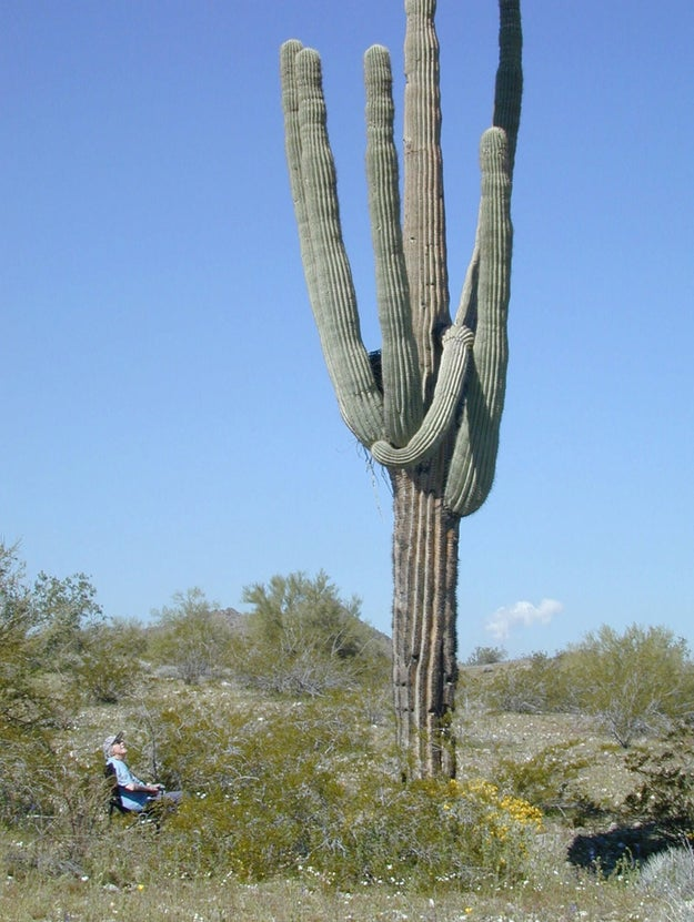 Tucson, Arizona, a city of about 530,700 people, sent Amazon a giant cactus as a welcome gift to the company.