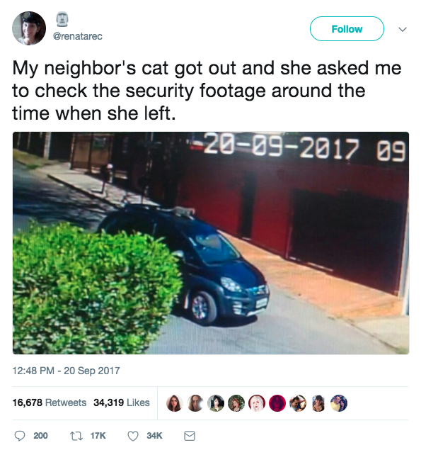 (Don't worry, the cat was fine.)