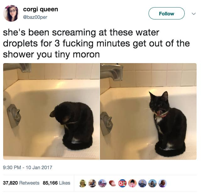 Tweets That Prove That Cats Are Adorable Assholes You Cant - 31 photos that prove cats are actually assholes