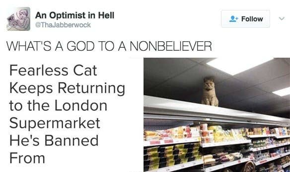 Honestly Just Read These Hilarious Cat Tweets Pushes Plant - Fearless cat keeps returning to the london supermarket hes banned from
