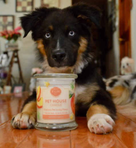 21 Things That'll Keep Your House From Smelling Like Your Pet
