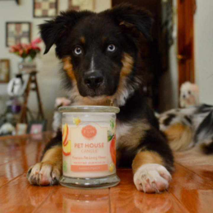 21 Things That 39 Ll Keep Your House From Smelling Like Your Pet