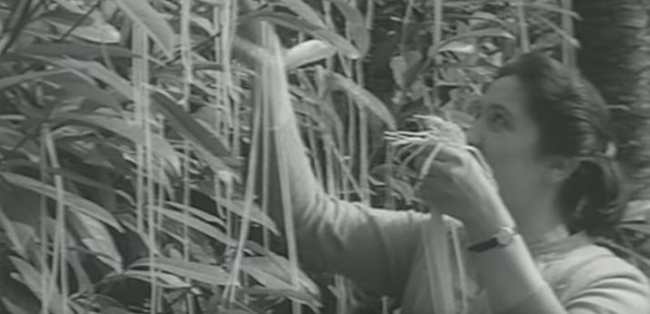 El 1 de abril de 1957, la BBC emitió un falso documental sobre cultivos de spaghetti en Suiza que mostraba a granjeros recogiendo spaghetti de los arbustos. El vídeo, en clave de humor, generó confusión; hasta parte de los televidentes se preguntaban dónde podían comprar sus propios árboles de spaghetti.