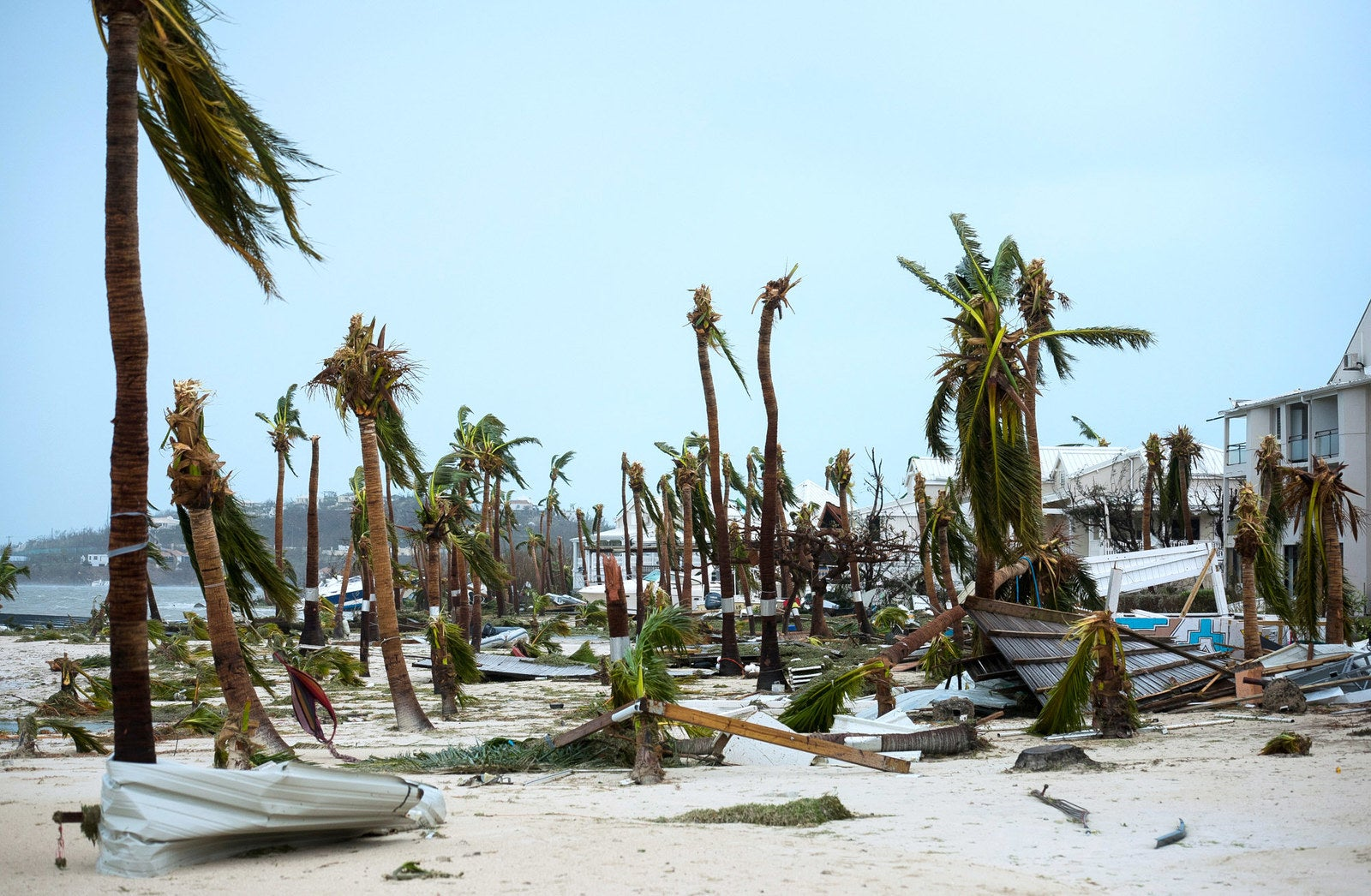Broken palm trees on the beach of the Hotel Mercure in Marigot, Saint Martin.