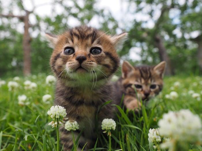 「劇場版 岩合光昭の世界ネコ歩き〜コトラ家族と世界のいいコたち」が10月21日(土)に公開されます。岩合光昭(いわごうみつあき)さんは、人気の動物写真家。特に、愛らしくも力強いネコ達の写真は幅広い層の人気を集めています。