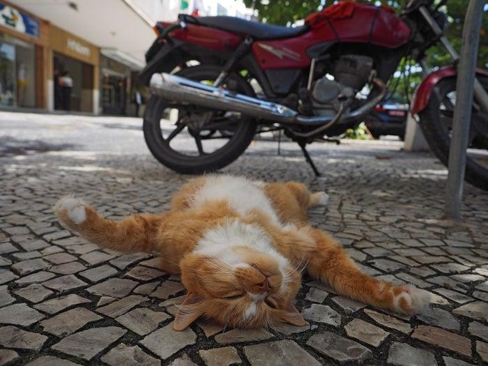 リオデジャネイロの道端でごろごろするネコ。