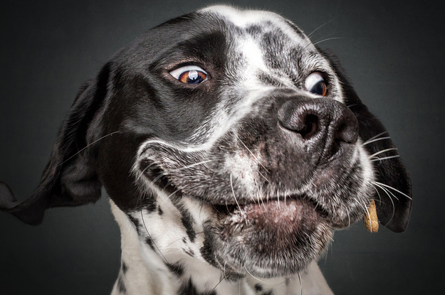 Please Enjoy These Very Cute Photos Of Dogs Catching Treats