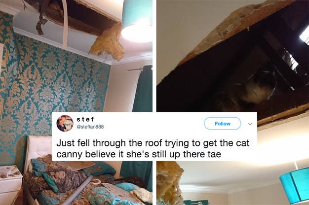 Tweets That Prove Cats Are The Devil And Dogs Are Angels - 31 photos that prove cats are actually assholes