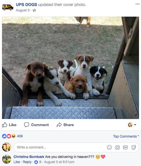Five years ago, McCarren was inspired to start a Facebook group — a community of sorts — for him and other UPS drivers to share photos and videos of their pup friends. He named it UPS Dogs.