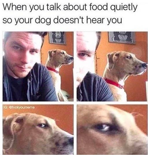 Memes To Show Your Dog Even Though They Cant Understand Them - 17 memes youd definitely send your dog if you could