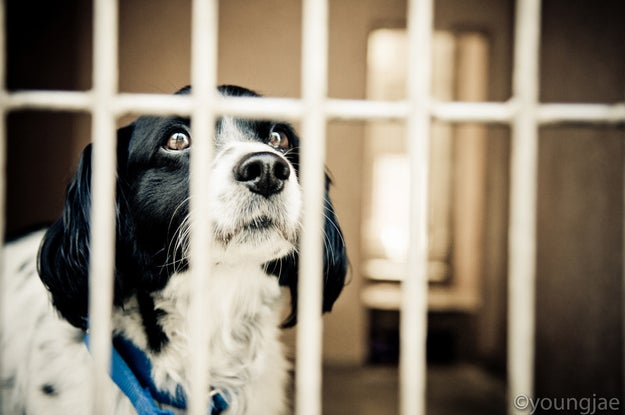 California has become the first state to require pet stores to sell only rescue animals, after Gov. Jerry Brown signed a law on Friday.