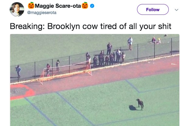 """Brooklyn Cow"" Got Loose In New York City And Fans Immediately Started Cheering"