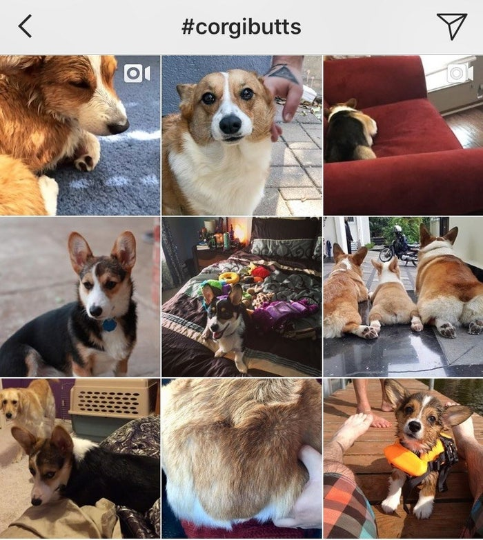 """""""I have 'happy pages' on standby on various apps on my phone. Whenever I see a news article/post that's hard to read, I switch over to my favorite documentary, or #corgibutts, or makeup tutorials on YouTube. They're always just enough to block out the tidal wave of shit that's going on in the world.""""—emilyd451f7b390"""