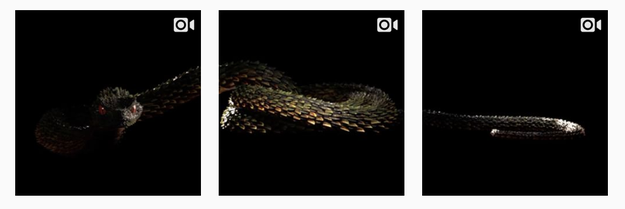 This past August, in anticipation of her new record, Reputation, Swift deleted her entire Instagram and put up three snake vids.